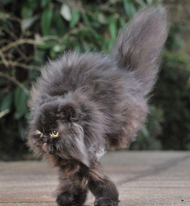 Caffrey the Cat