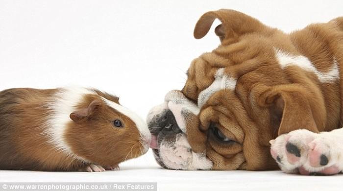 Cute Overload Animals