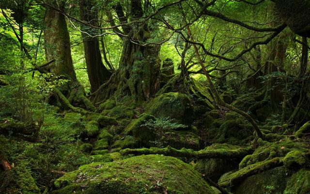 Beautiful nature, part 4