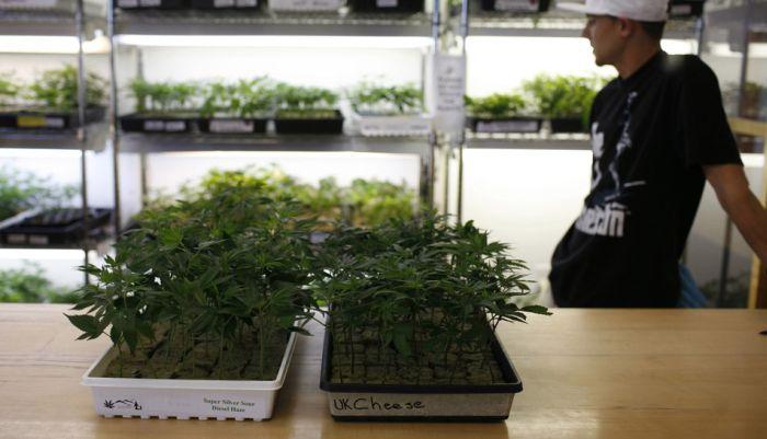 Marijuana In the USA