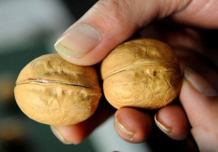Chinese Walnuts