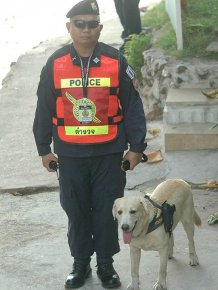 Police Dog in Thailand