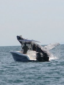 Whale Attacks a Boat in Mexico