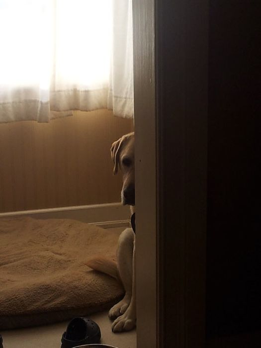 Dog Photos, part 2