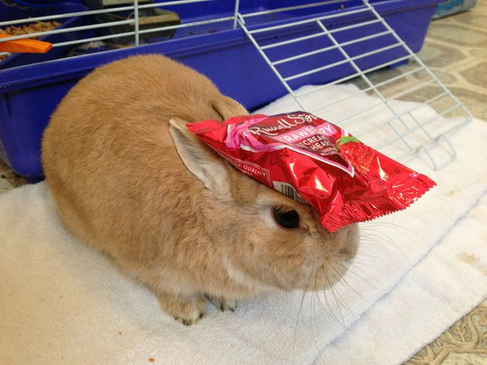 Stuff On My Rabbit