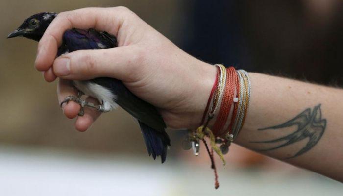 Birds Being Weighed