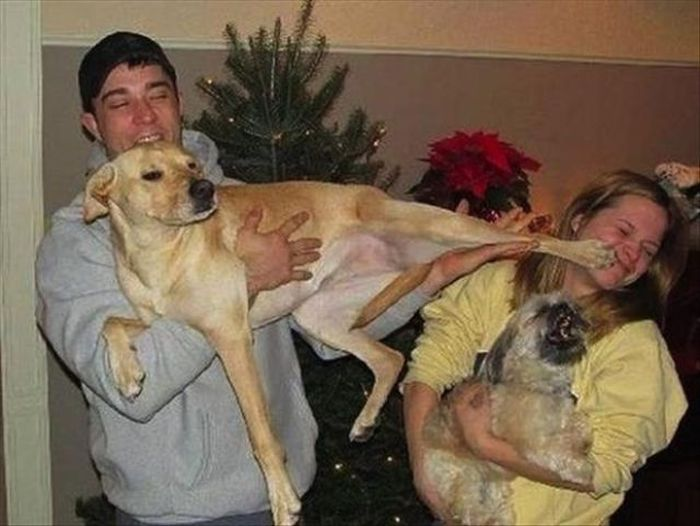 Crazy Pets and Their Crazy Owners