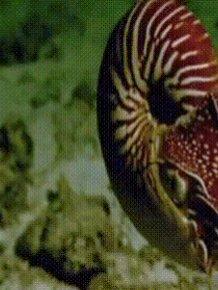 Sea Life GIFs