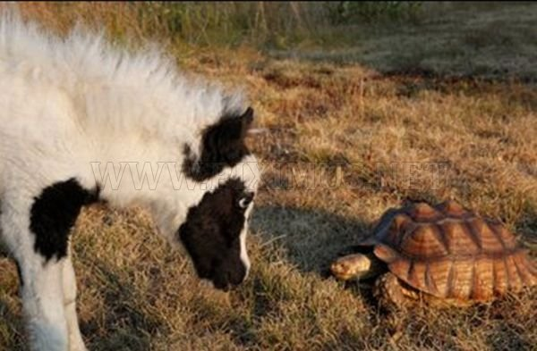 The World's Smallest Minihorse