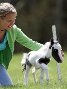 The World's Smallest Minihorse