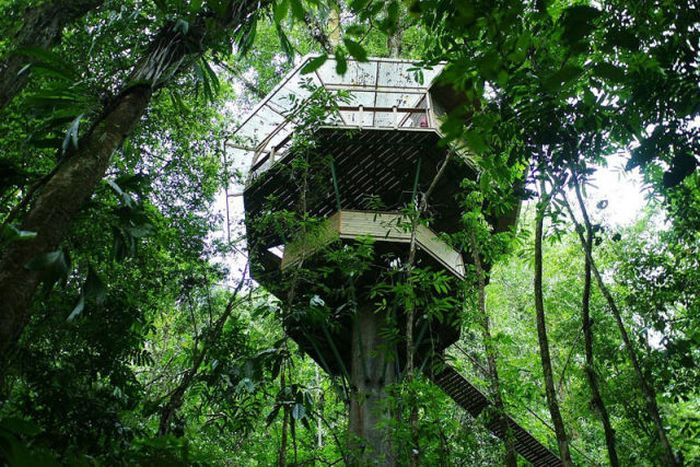 Treehouse Community