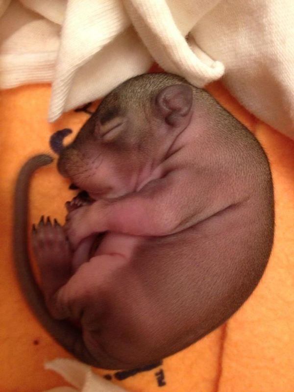 Baby Squirrel Zip Day 1 thru Week 5, part 5