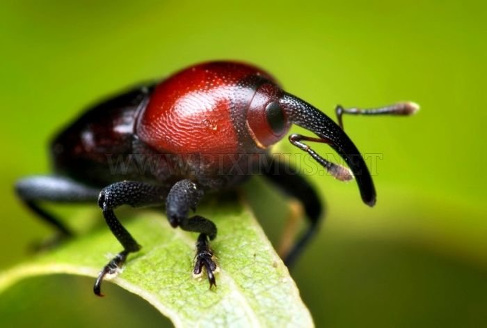 Amazing Photos of Insects
