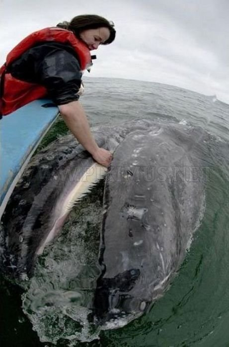The World's Friendliest Whales