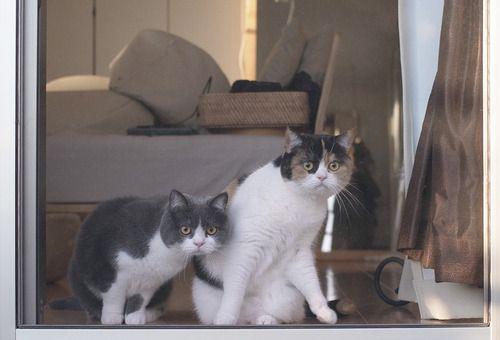 Cats, part 2