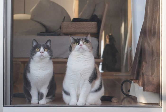Funny Cats, part 2