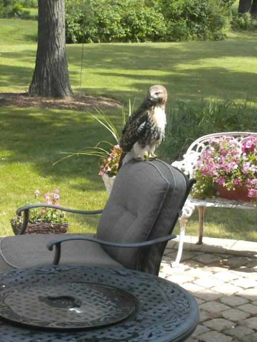 Ellis the Hawk