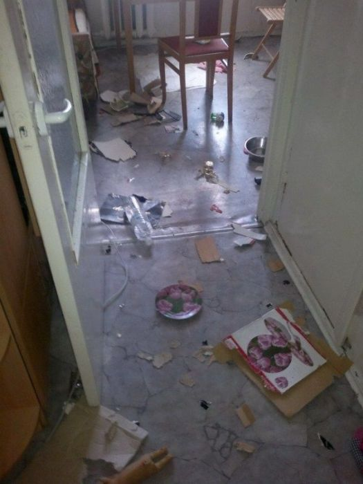 Puppies  Destroy Home