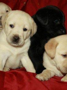 Puppies  Destroy Home