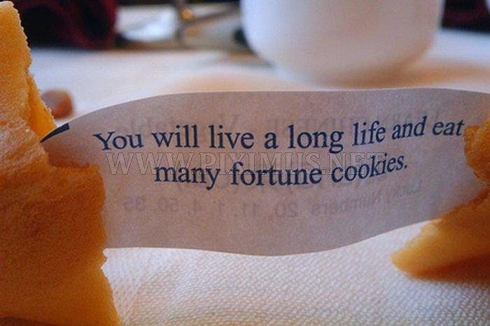 Hilarious fortune cookies fortunes