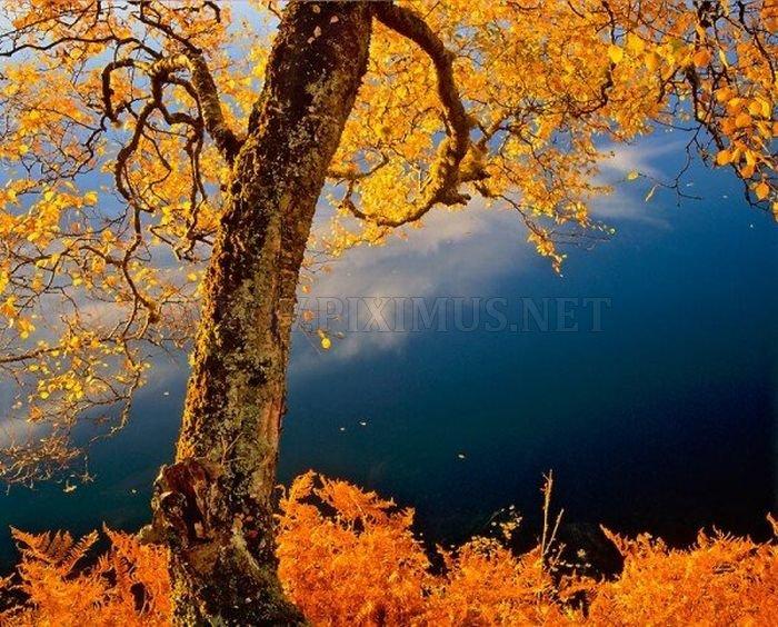 Beautiful Landscapes , part 4