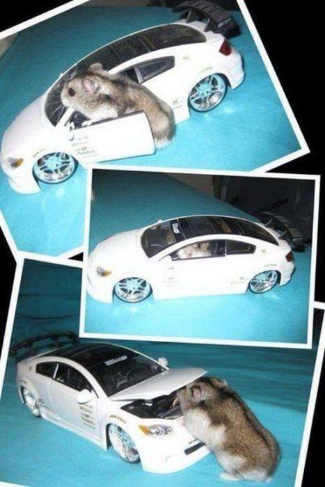 Funny Car-Themed Photos, part 3