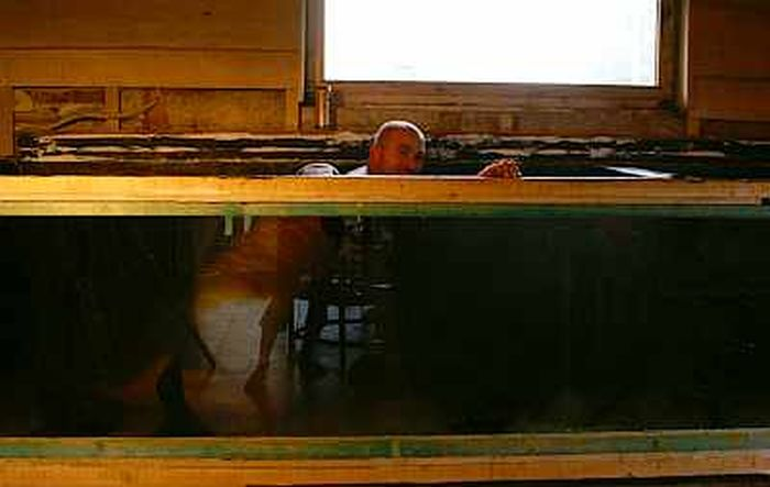 DIY 660 Gallons Aquarium