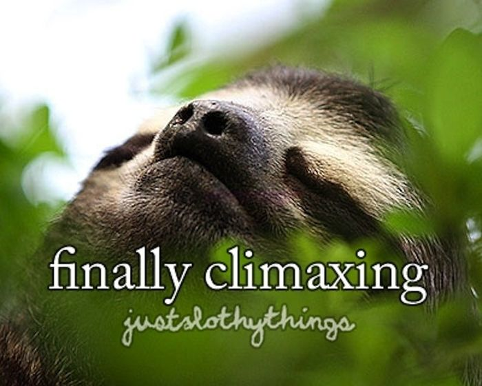 What It's Like to Be a Sloth