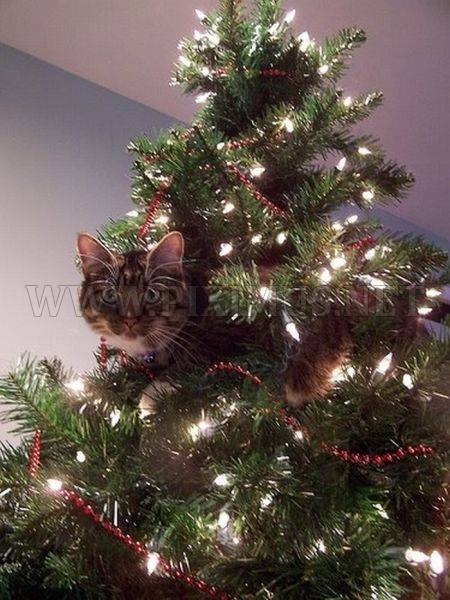 Cats in christmas trees animals Christmas tree cat tower