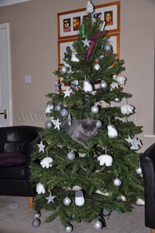 Cats in Christmas Trees