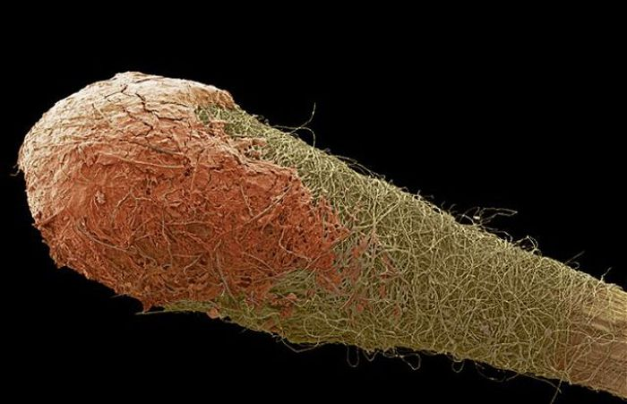 Everyday Items under a Microscope