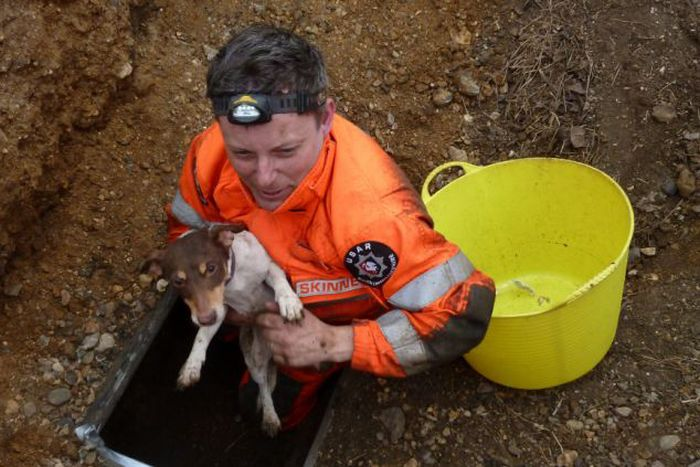 Rescuing Jack Russell
