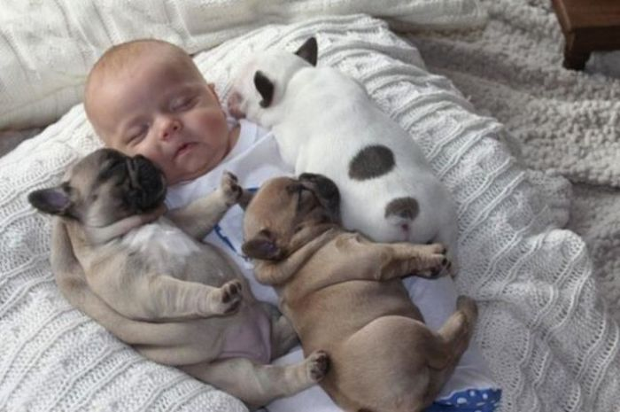 Baby with Bulldog Puppies