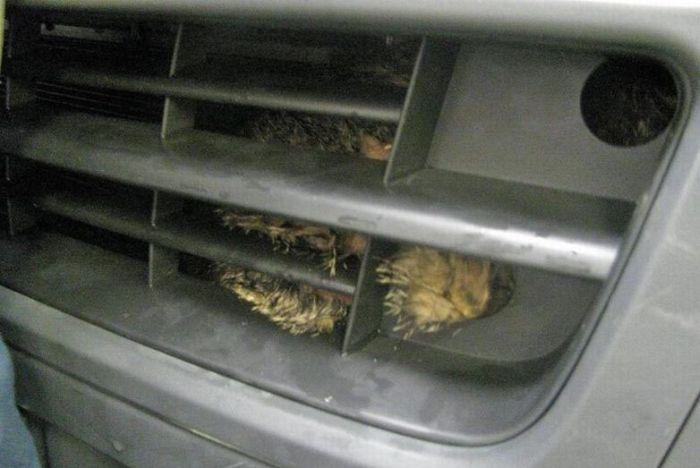 Cat at the Car Wash