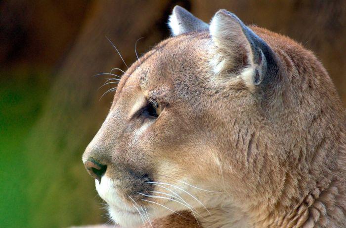 Beautiful Animal Pictu...