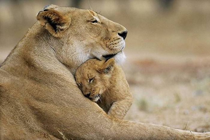 Beautiful animal pictures animals beautiful animal pictures voltagebd Image collections