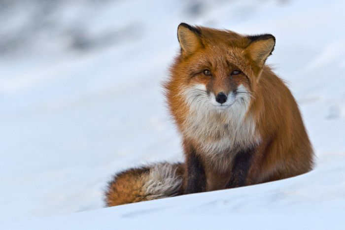 Beautiful Animal Pictures