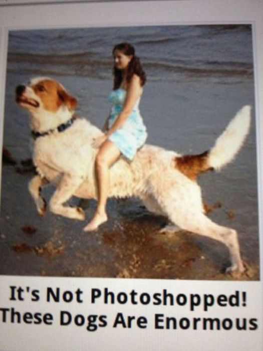 Amateur Photoshop Fails and Wins