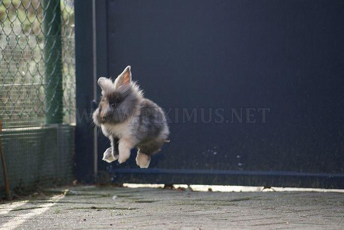 Jumping Bunnies