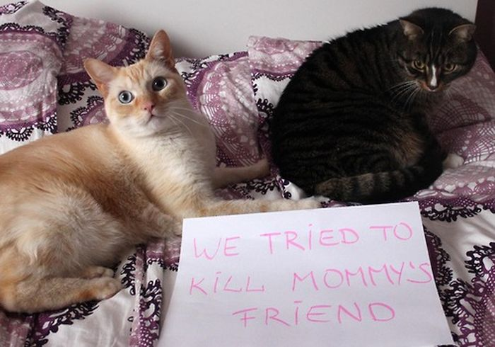 Cat Shaming, part 2