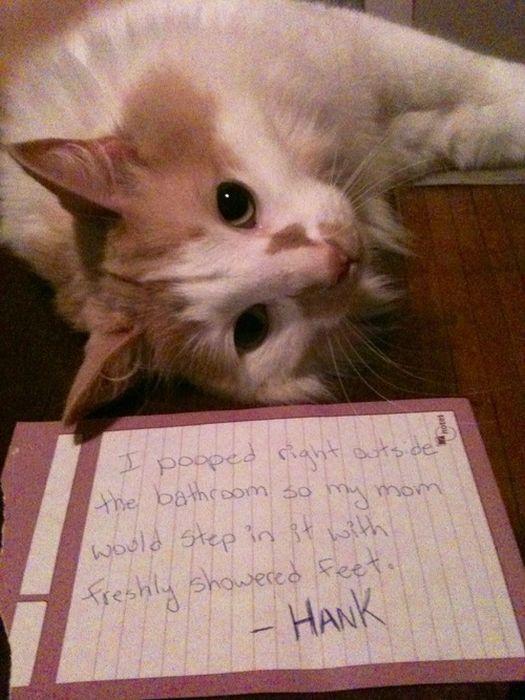 Cat Shaming, part 2