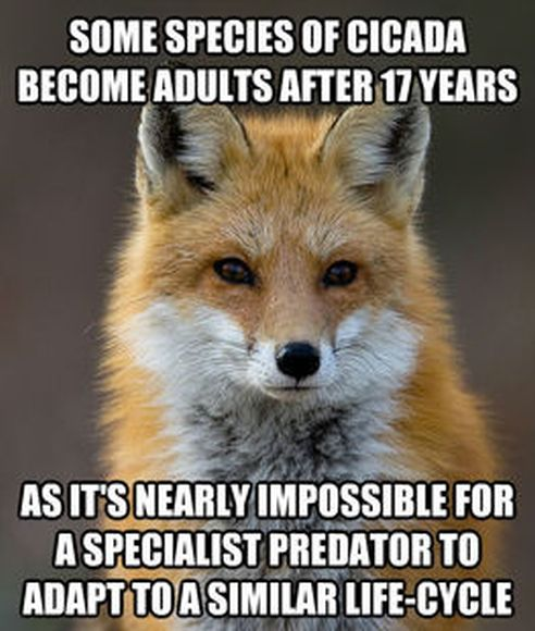 Fun Fact Fox Meme