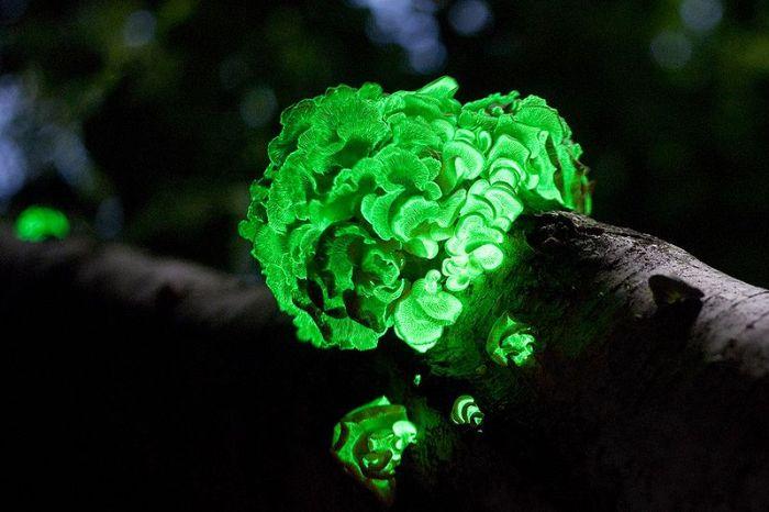 Great Looking Fungi
