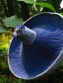Great Looking Fungi