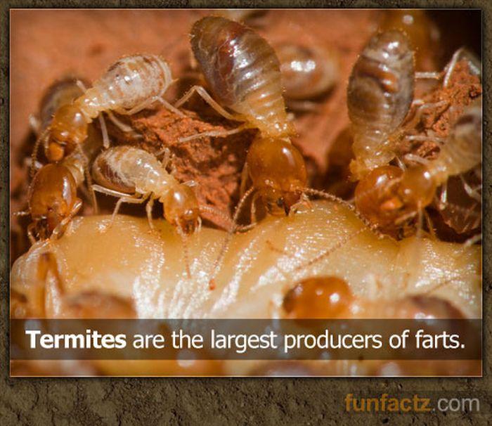 Fun Facts, part 3