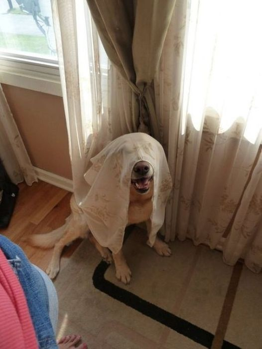These Dogs Suck At Hide-And-Seek