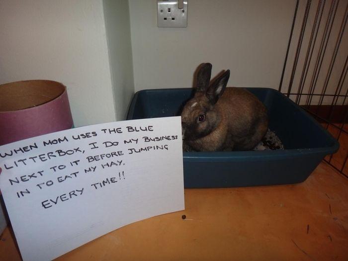 Bunny Shaming