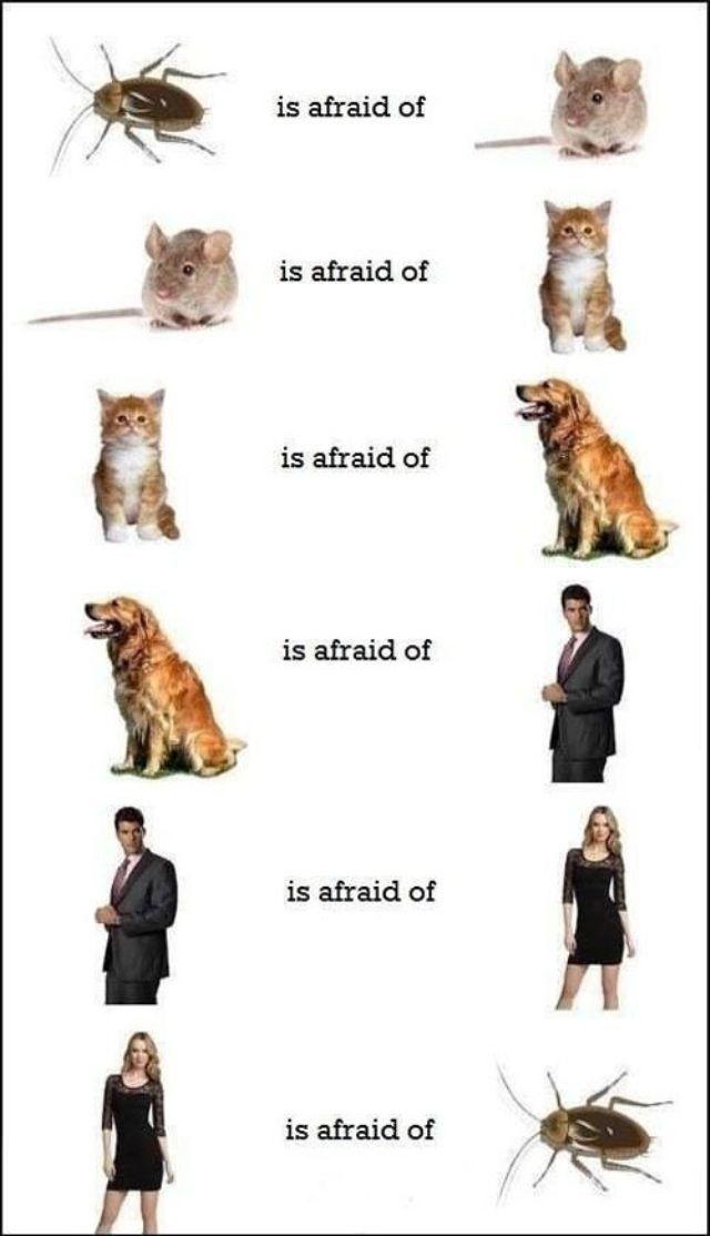 It Makes Sense