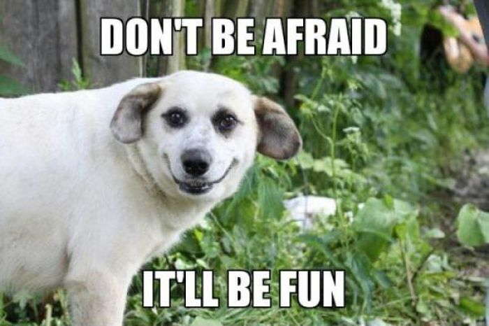 Image result for don't be scared meme