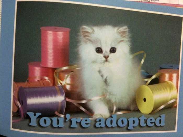 Breaking Bad News with Baby Animals